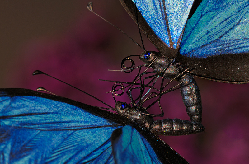 amazingly detailed blue butterflies dancing in air