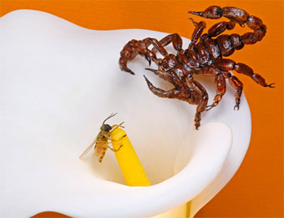 realistic scorpion and a realistic bee