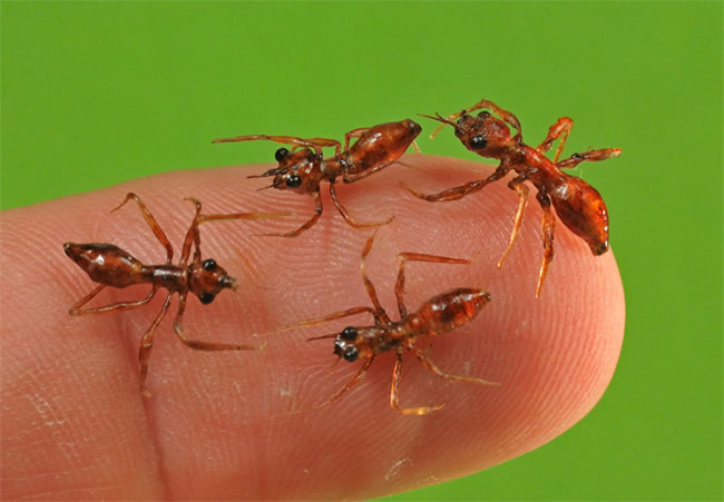 Realistic life-size ants