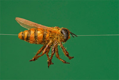 realistic bee with Optional internal 1mm hollow brass tube, for filming bugs in flight, sliding down a wire