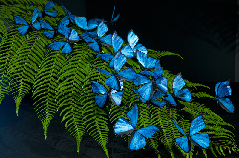realistic beautiful Blue Morpho butterfly replicas