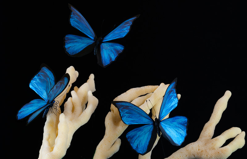 Gorgeous realistic Blue Morpho butterfly replicas in flight