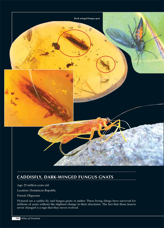 Caddis Fly published in The Atlas of Creation